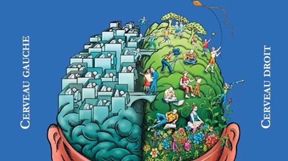 cerveau gauche versus cerveau droit
